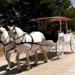 Carriage of Occasion